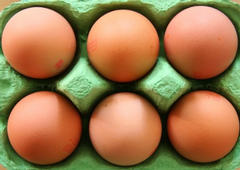 eggs, salmonella, deaths, germs, sick, foodborne